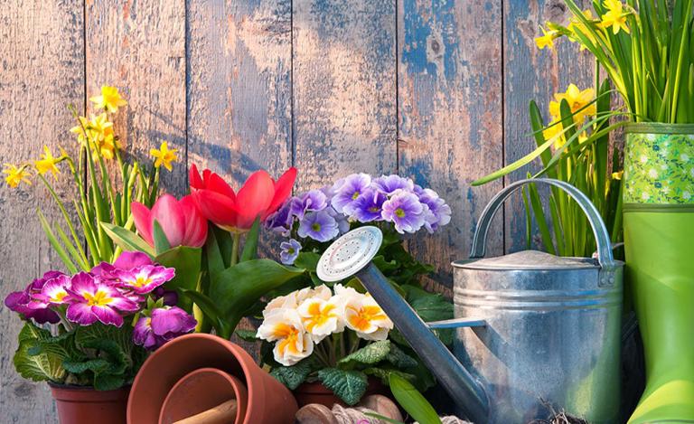 Декоративное растениеводство и цветоводство
